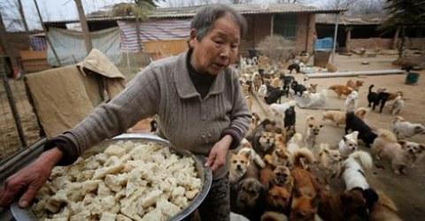 5 ancianas cuidan de 1300 perros en China