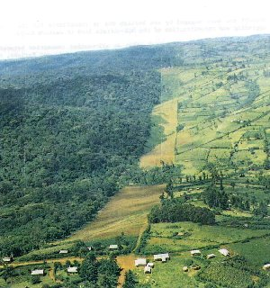 Bomet and Sotik are located in the wet, fertile highlands west of the Rift Valley. Picture by Masdar International.