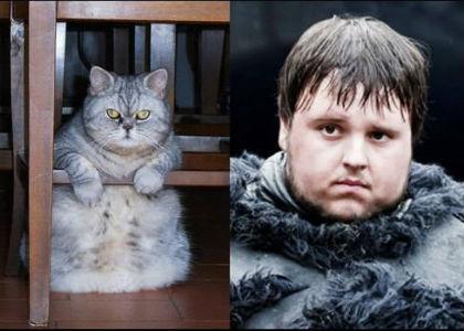 cat-of-thrones-5