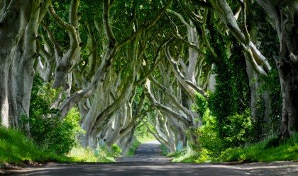 L'incantevole Dark Hedges in una immagine di Ireland-Guide.com