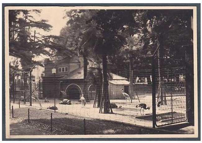 Le voliere dello zoo di Milano negli anni 50 - intervista a Paolo Riva