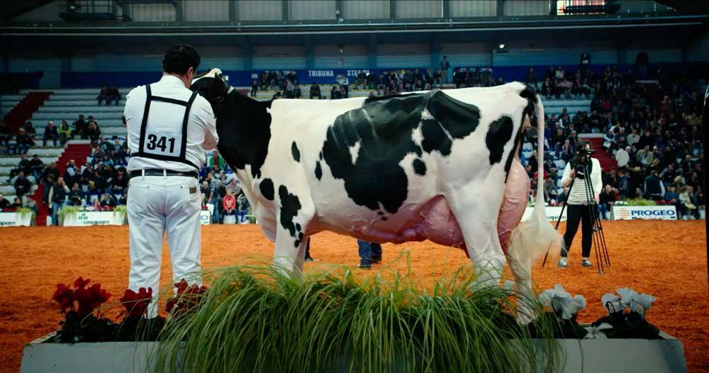 L'esposizione di una mucca geneticamente modificata in una scena del film - Photo: courtesy of Movieday