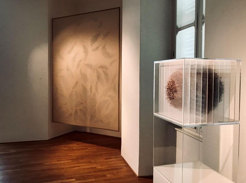 In-flore-scientia, opere di Gabriela Maria Müller - Photo by MaSeDomani