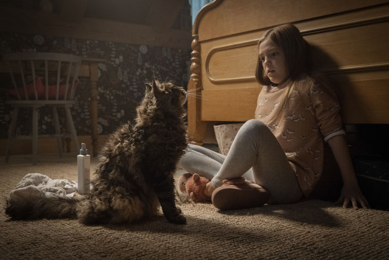 Una scena del film Pet Sematary (2019) - Photo: 20th Century Fox