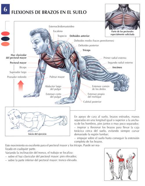Los ejercicios y el aumento del pecho