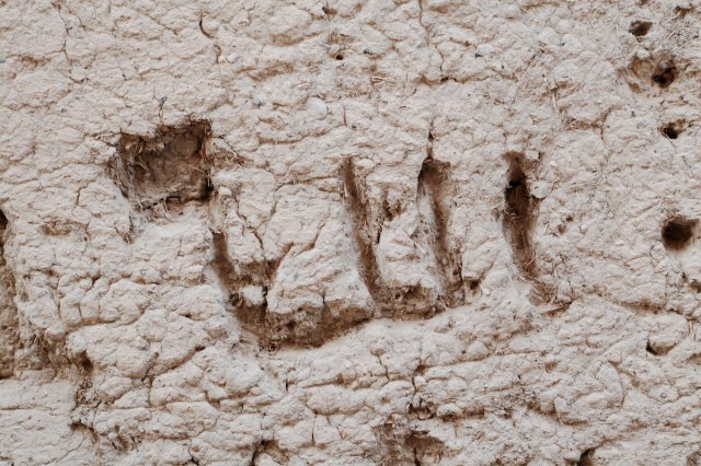 """Allah,"" on a mud wall in Nizwa, Oman."