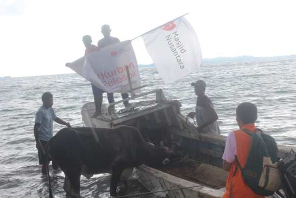 Tegang! Aksi Relawan Selamatkan Sapi Kurban yang Terjun ke Laut