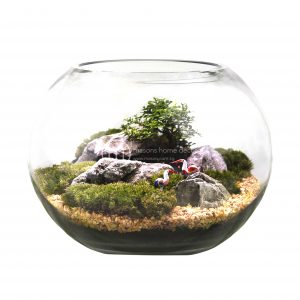 Bultnik Ready Made Terrarium Masons Home Decor