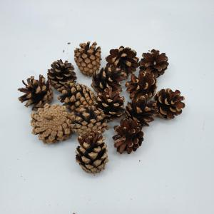 Mini Pine Cones - Masons Home Decor