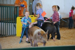 Payton Haynes, 5, shows his pig Kesha in the 4-H market. This is Payton's first year in 4-H. Photo by Myrtie Haynes.