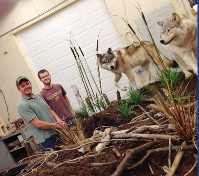 Jamie Flewelling and habitat designer, Jason Steiger stand in front of a grey wolf display that will be installed at a Cabelas store near Buffalo, N.Y.