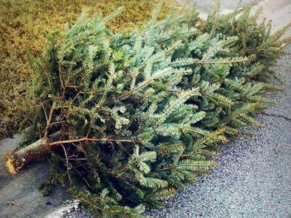 christmas_tree_disposal