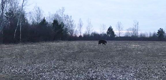 bear scottville