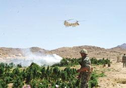 القوات المسلحة تدمر 1935 مزرعة بانجو و خشخاش في سيناء