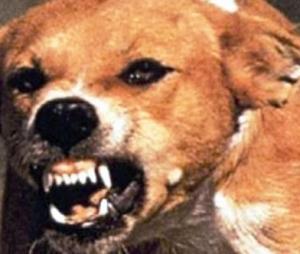 مصر النهاردة | كلاب مسعورة تهاجم المواطنين في مدينة نصر