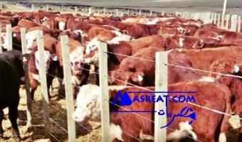 حملة مقاطعة اللحوم