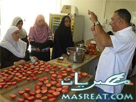 اسعار الطماطم اليوم فى مصر