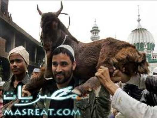 مسجات تهنئة عيد الاضحى المبارك
