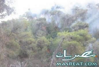 حرائق الكرمل اسرائيل|ارتفاع ضحايا حريق اسرائيل الى 34 قتيلا