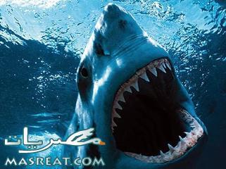 حوادث اسماك القرش في شرم الشيخ مستمرة :الفك المفترس قتل المانية