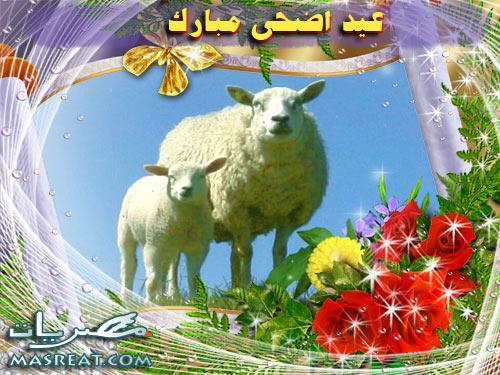 تحميل صور خروف العيد