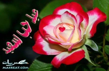 رسائل عيد الحب 2019 رومانسية للحبيب