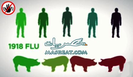 اخبار مرض انفلونزا الخنزير فى مصر