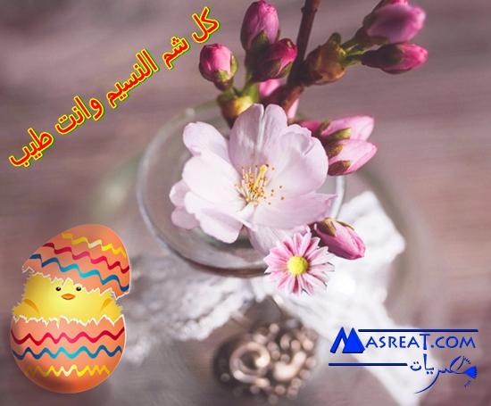 بطاقة بيضة شم النسيم مع الكتكوت