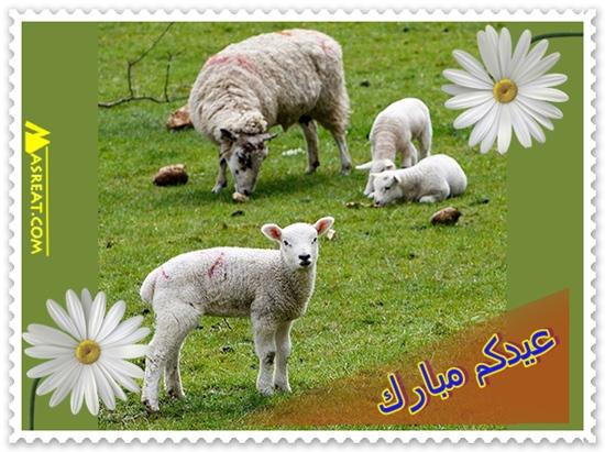 صور خراف العيد منظر طبيعي