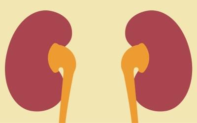El sistema urinario y sus implicaciones en la salud
