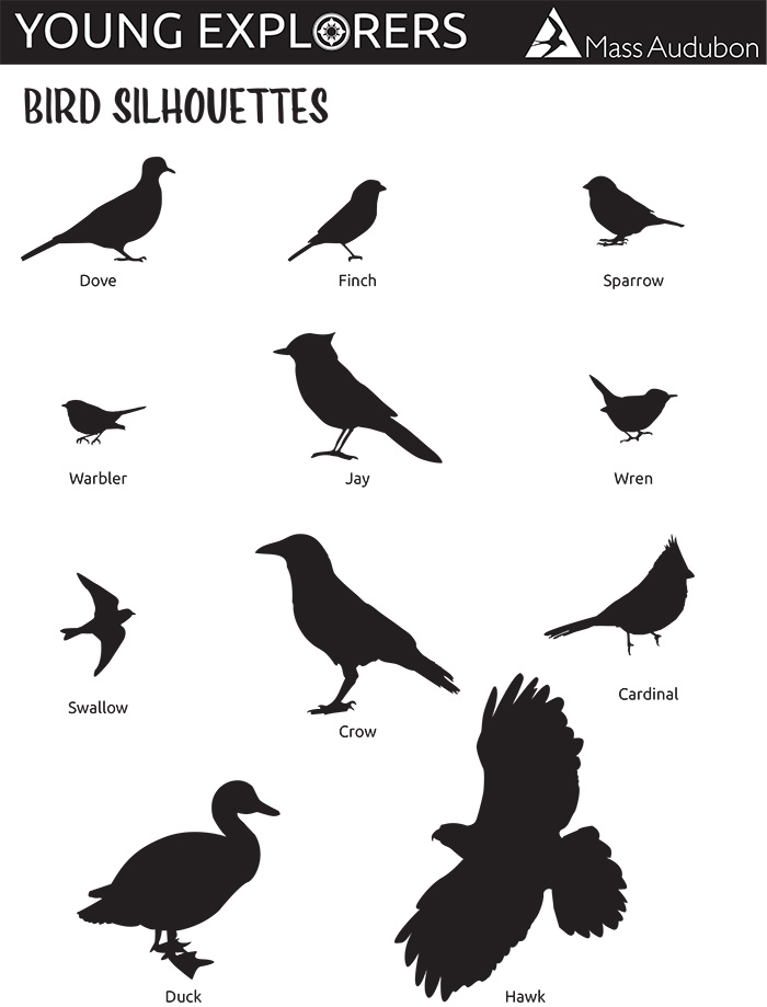 Warblers By Number—Bird Silhouettes