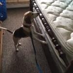 Detection Dog Inspection