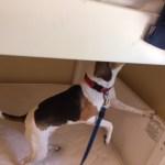 dog inspection 1
