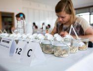 Un total de 83 gofios compiten desde hoy por ser declarados el mejor de Canarias