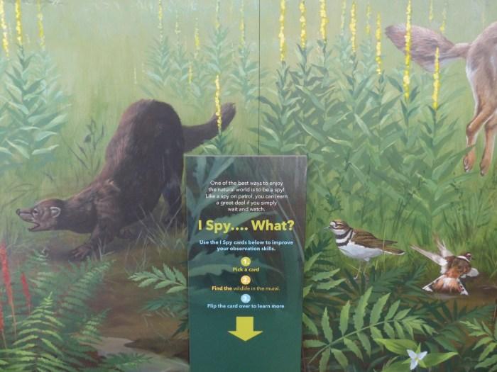 Nicandri Nature Center exhibit