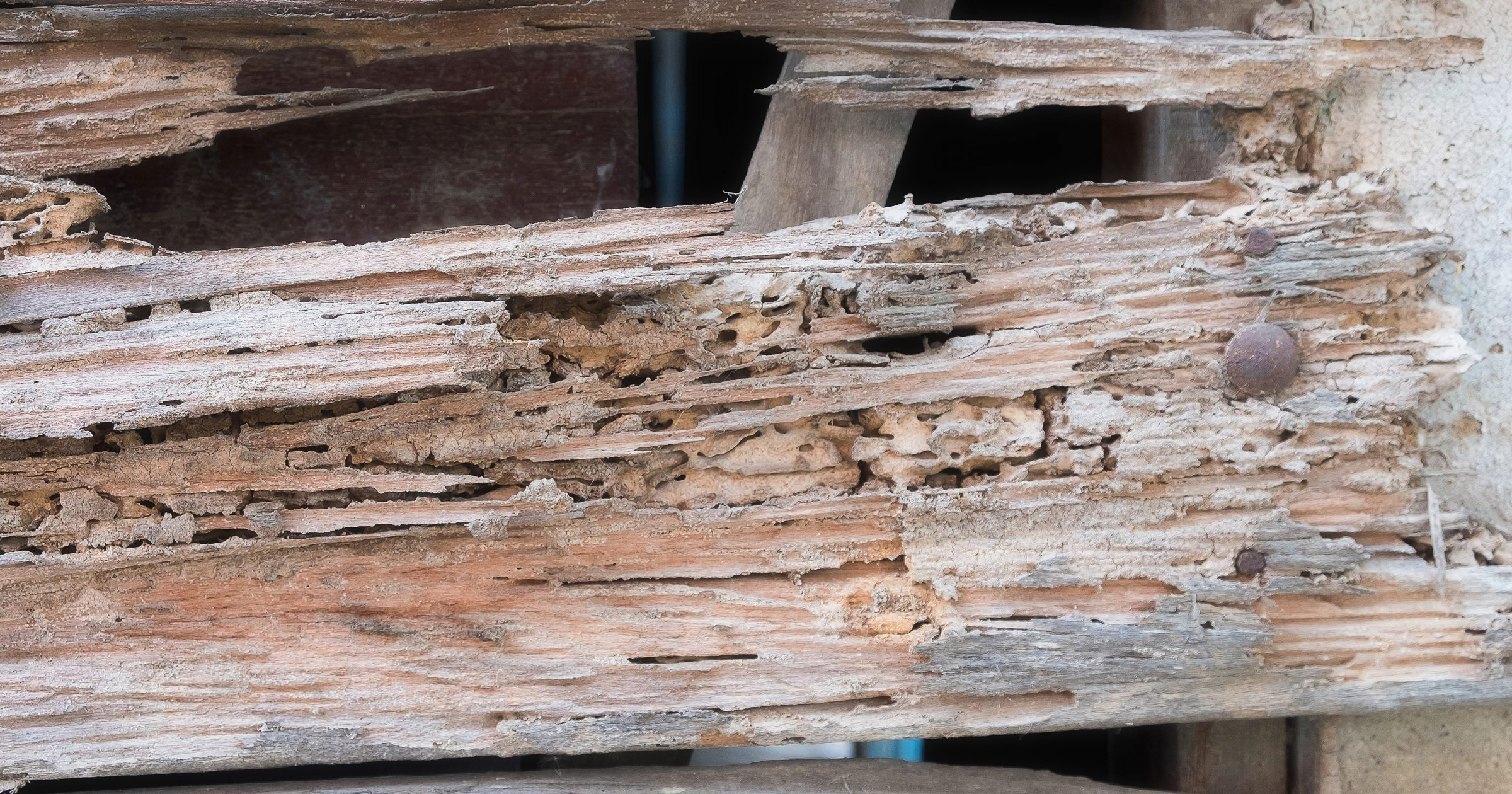 6 Warning Signs of Termite Damage  Massey Services Inc