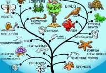 Kesimpulan Teori Darwin Tentang Seleksi Alam