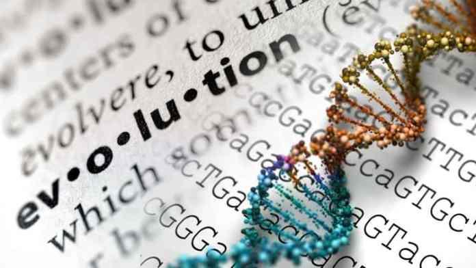 Pengertian Evolusi Biologi Dan Contohnya - Artikel Teori Dasar