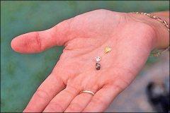 Arkansas Diamonds