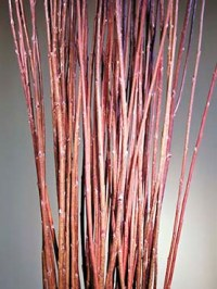 Willow & Building Material