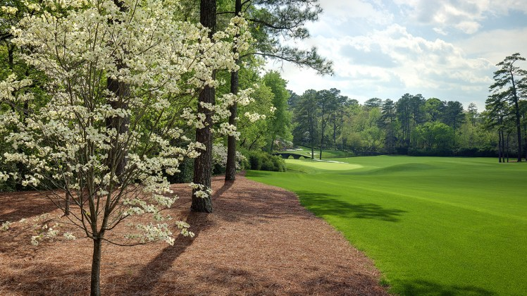 Hole 11 - White Dogwood