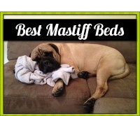 The 4 Best Extra Large Dog Beds for Dogs as Massive as ...