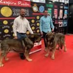 39 Exposición Internacional Canina de Melide (Coruña).
