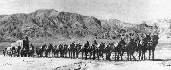 Mule Teams