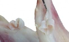 歯ぐき移植 練習 歯ぐき下がり