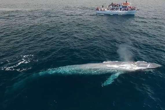 صوت الحوت الازرق في مصر