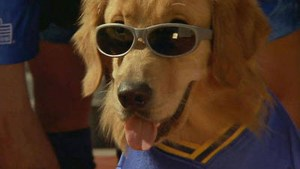 air-bud-sunglasses