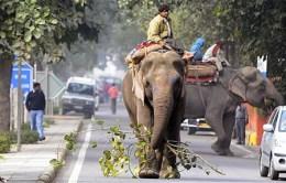 Elephant rides in Delhi. Courtesy of the Telegraph.