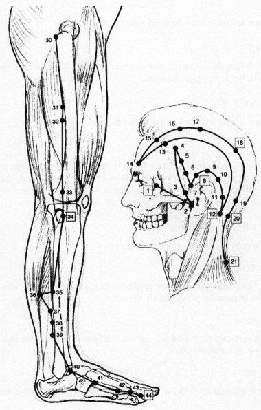 Méridien de la vésicule biliaire « Acupuncture « Articles