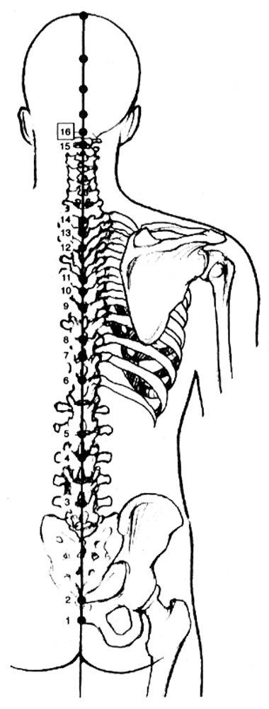 Méridien du vaisseau gouverneur « Acupuncture « Articles